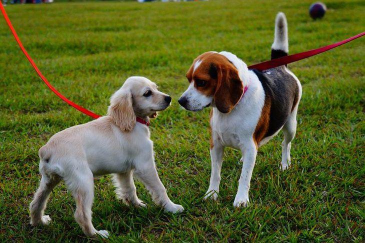 Специалисты рассказали, сколько нужно гулять с собакой для профилактики ожирения