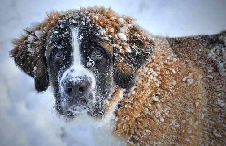 Как ухаживать за собакой зимой