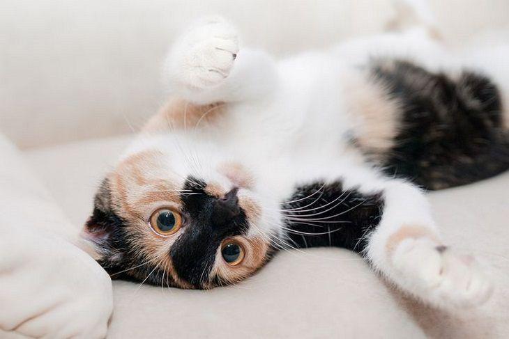 Кто больше, кошки или собаки, преданы хозяевам: вывод ученых