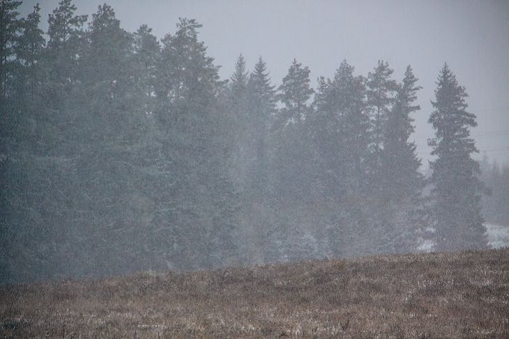 В Беларуси открыли охоту на пушных зверей