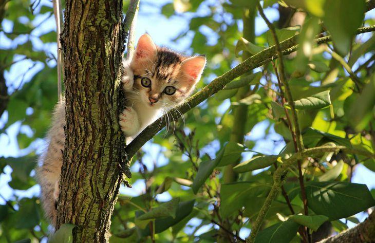 Эксперты узнали, как кошки находят дорогу домой