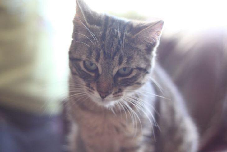 Удивительные кадры. Кот спас малыша от падения с лестницы