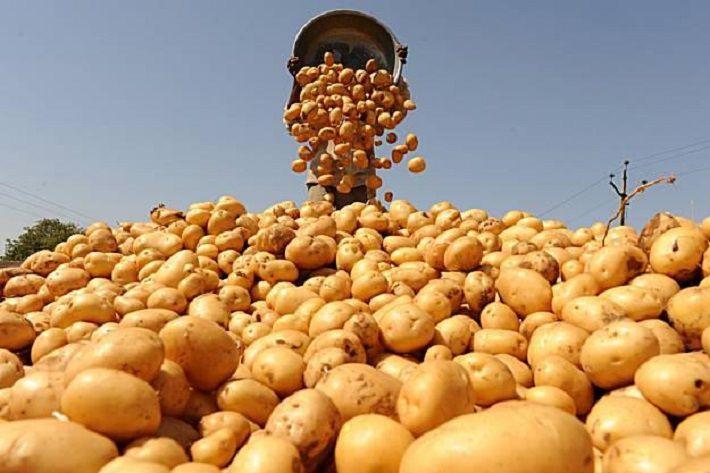 Беларусь собрала в этом году более 1 млн тонн картофеля