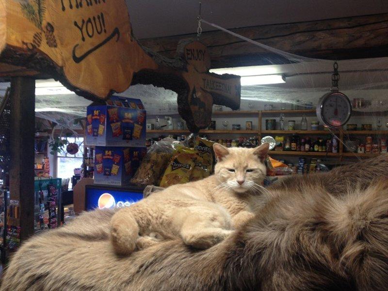 известный кот фото