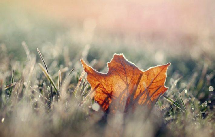 В субботу 28 октября будет до трех градусов мороза