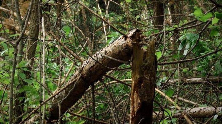 В Чехии 2 человека погибли под рухнувшими во время урагана деревьями?