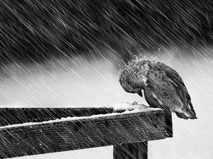 Дождь со снегом и сильные порывы ветра ожидаются 30 октября в Беларуси