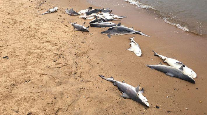 Ученые выяснили, кто съел мозг акул, найденных у американских берегов