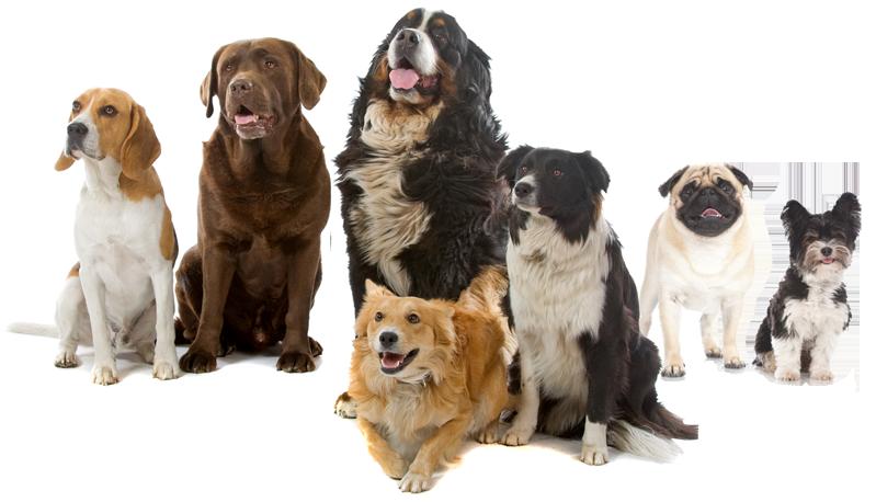 Ученым удалось выявить неожиданную пользу домашних животных