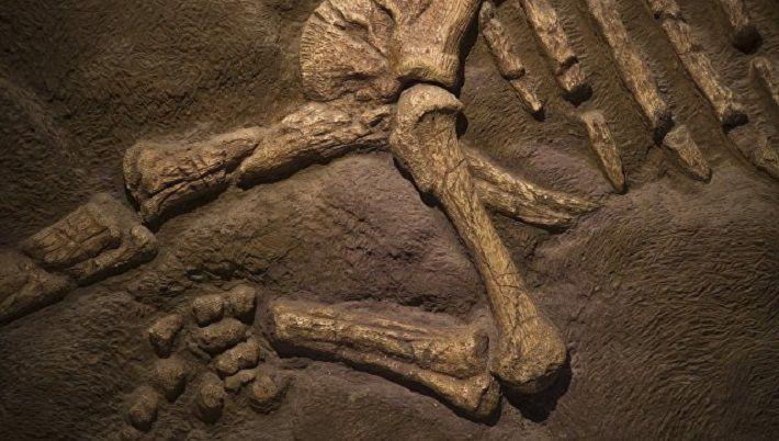 В США нашли неизвестного ранее динозавра