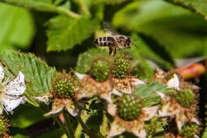 Через 17 лет на Земле исчезнут пчелы и случится страшное