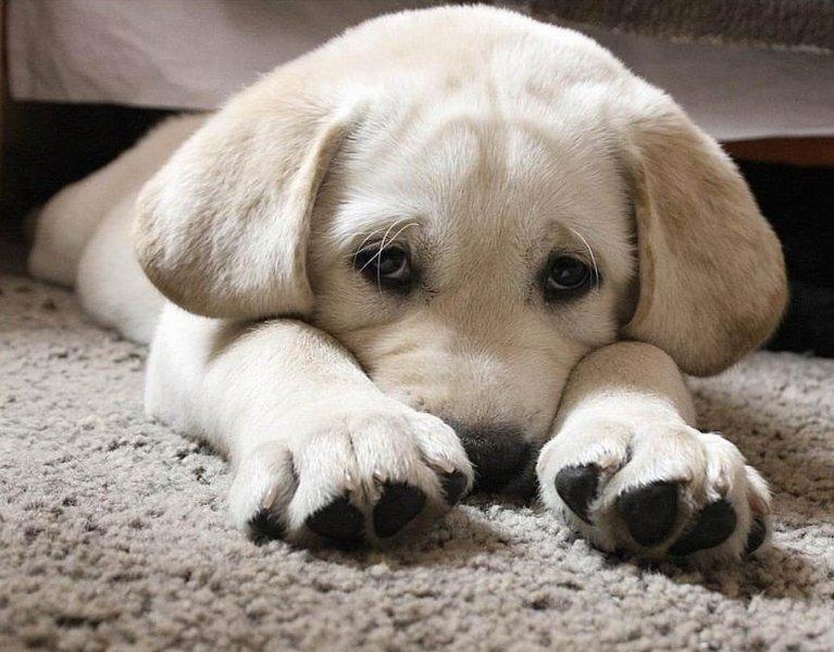 щенок просит прощения картинки состригали