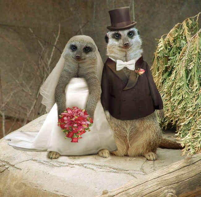 Фото свадебных открыток шуточных, поздравлением для
