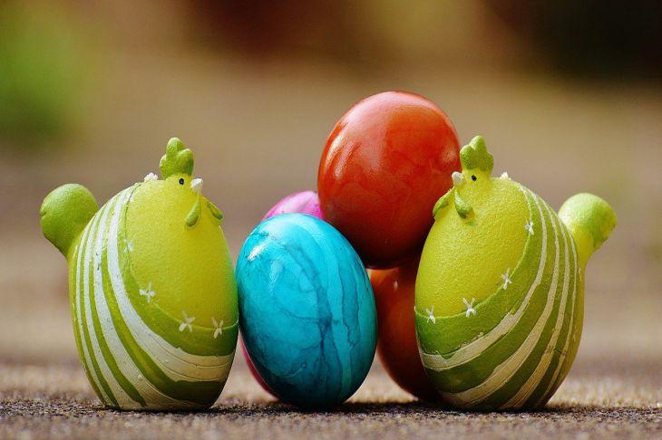 Яйца куры
