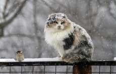 Сегодня днем в Беларуси ожидается мокрый снег