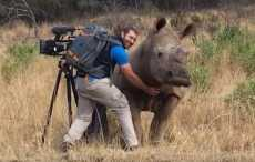 Чешет брюхо носорогу