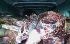 На Смоленщине задержали белорусское мясо «с душком»