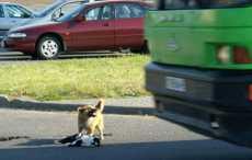 Собака пыталась спасти сбитого кота в Слуцке