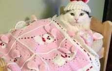 кошка в мини-кроватке