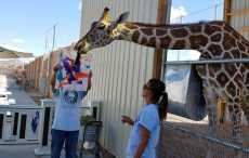 жираф художник