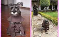 пес-монах