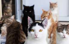 кошки в квартире