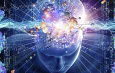 Ученые: мозг может делиться на части