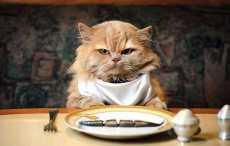 Ученые узнали, отчего кошки бывают привередливы в пище
