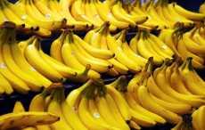 Ученые: бананы помогут победить вирусные заболевания
